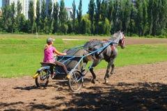 Reiten, Pferde sporthorse Hippodrom von Kiew Stockfotos
