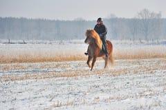 Reiten in Winter Lizenzfreies Stockbild