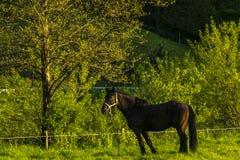 reiter Stockfoto