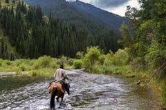 Reiter auf dem Pferd bewegt einen Gebirgsfluss stockfotos