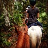 Reiter auf einem Pferd Lizenzfreies Stockbild