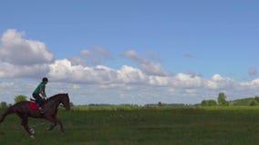 Reiter der jungen Frau, der ein Pferd durch Galopp auf das Feld reitet stock footage