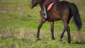 Reiter, der zu Pferd auf ein n-Feld galoppiert Rückseitige Ansicht Langsame Bewegung Abschluss oben stock video