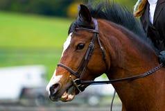Reiter. Pferd und Mitfahrer. Stockfotografie