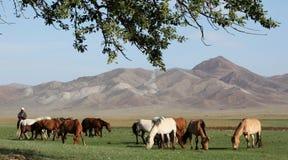 Reiter und Herde stockbild
