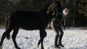 Reiterin berührt das Pferd stock video