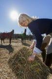 Reitermodell und Pferde Stockfotografie