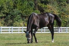 Reiterpferd stockbild