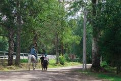 Reiterpferd mit einem weiblichen Reiter nach einem Ausbildungsweg von der Koppel zur Weide lizenzfreie stockfotos