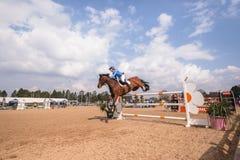 Reiterpferdeshow-Aktions-Springen Stockbild