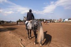 Reiterpferdeshow-Springen Stockbild