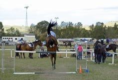 Reitershowpferd u. springende Stange des Reiters der Hürde auf Hindernislauf Lizenzfreie Stockbilder