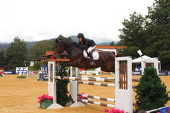 Reitersport I Stockfotos