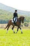 Reitersport. Weiblicher Dressagemitfahrer Stockbild