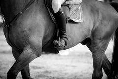 Reitersporte Stockfotografie