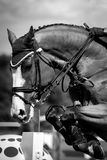 Reitersporte Stockbild