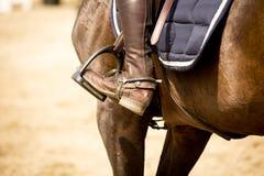 Reitersporte Stockbilder
