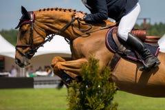Reitersporte Lizenzfreie Stockfotos