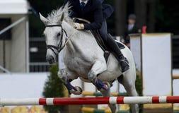 Reitersporte, Pferd, das, springende Show, Reiten springt lizenzfreies stockbild