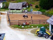 Reithof 女孩拿着小马在辔 免版税库存图片