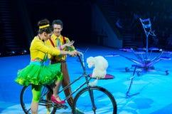 Reizen van het Circus van Moskou op Ijs Opgeleide honden Stock Foto's