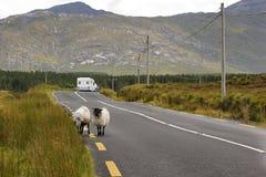 Reizend bij Ierland, schapen en sta-caravan stock foto