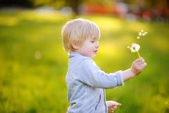 Reizend blonde Schlaglöwenzahnblume des kleinen Jungen am sonnigen Sommertag Stockbild