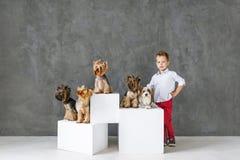 Reizend blonder Junge und fünf wenige Yorkshire-Terrier Lizenzfreies Stockfoto