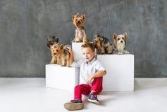 Reizend blonder Junge und fünf wenige Yorkshire-Terrier Lizenzfreie Stockfotografie