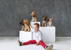 Reizend blonder Junge und fünf wenige Yorkshire-Terrier Lizenzfreie Stockfotos