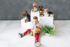 Reizend blonder Junge und fünf wenige Yorkshire-Terrier Stockfoto