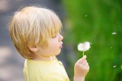 Reizend blonder kleiner Junge, der mit Löwenzahnblume am Sommertag spielt Stockbild
