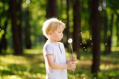Reizend blonder kleiner Junge, der mit Löwenzahnblume am Sommertag spielt Stockfotografie