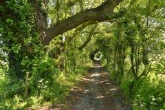 Reizend Feldweg von Ost-England lizenzfreies stockfoto