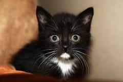 Reizend Kätzchen Stockbild