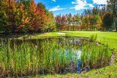 Reizend ovaler Teich im Park Lizenzfreie Stockfotografie