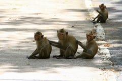 Reizende Affen, lustiger Affe Stockbilder