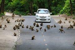 Reizende Affen, lustiger Affe Lizenzfreies Stockfoto
