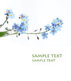 Reizende blaue Blumen Lizenzfreies Stockfoto