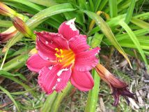Reizende Blume lizenzfreies stockfoto