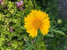 Reizende Blume Lizenzfreie Stockfotos