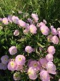 Reizende Blume Stockbilder