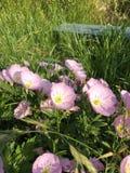 Reizende Blume Stockfotografie