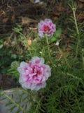 Reizende Blume von meinem Garten stockbilder