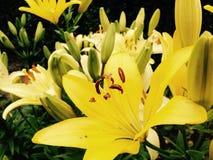 Reizende Blumen Lizenzfreie Stockfotos