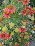 Reizende Blumen Lizenzfreies Stockfoto