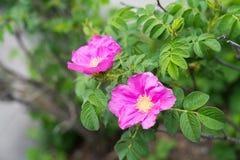 Reizende Blumen Stockfoto