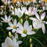 Reizende Blumen in den Sommerpurpurpedalen Stockbild