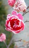 ?Reizende feenhafte? Blume unter Eis Lizenzfreies Stockbild