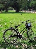 Reizende fietsen Stock Afbeelding